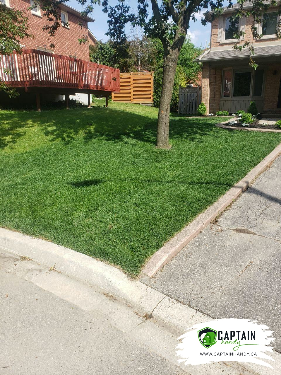 home landscaping sod