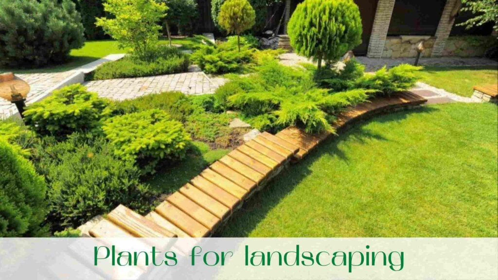image-landscaping-yard