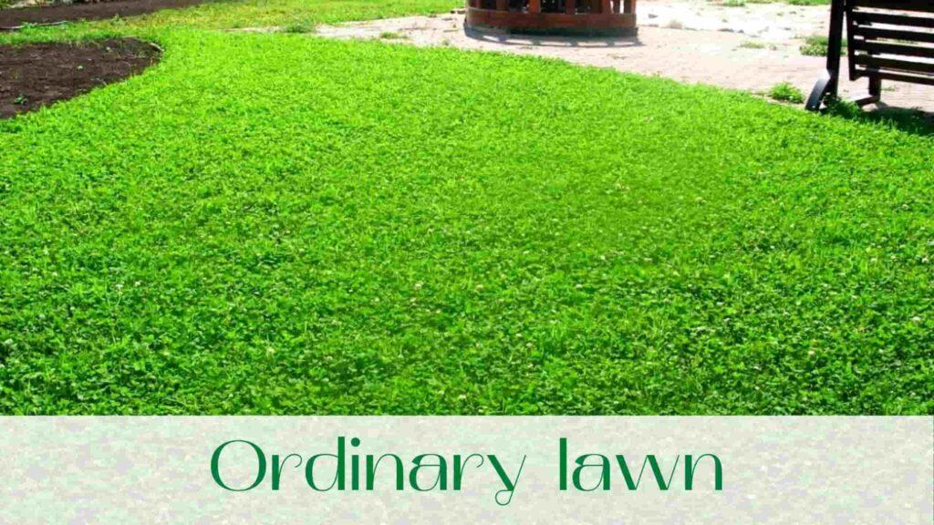 image-Ordinary-lawn-in-Uxbridge