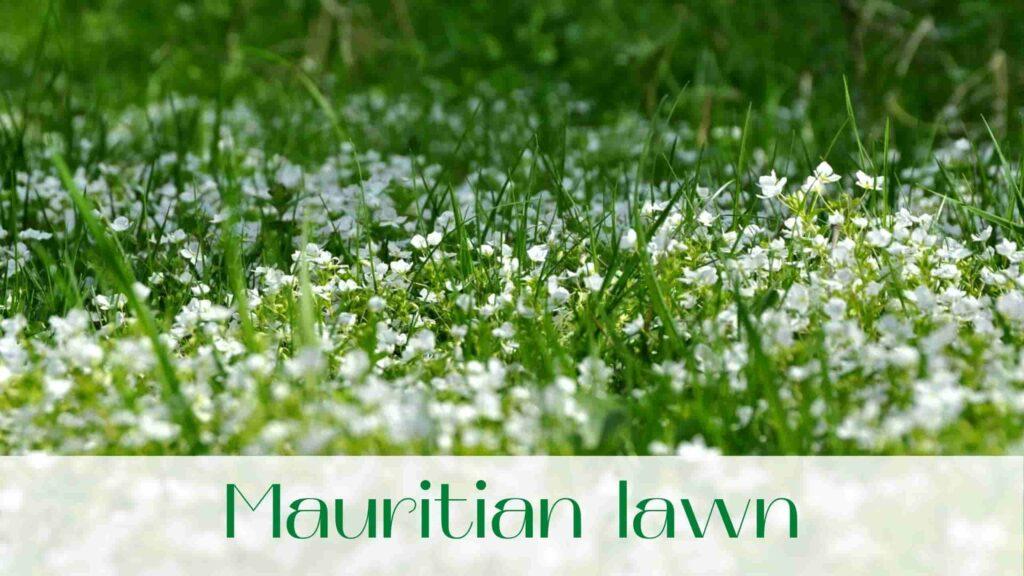 image-mauritian-lawn-in-Uxbridge
