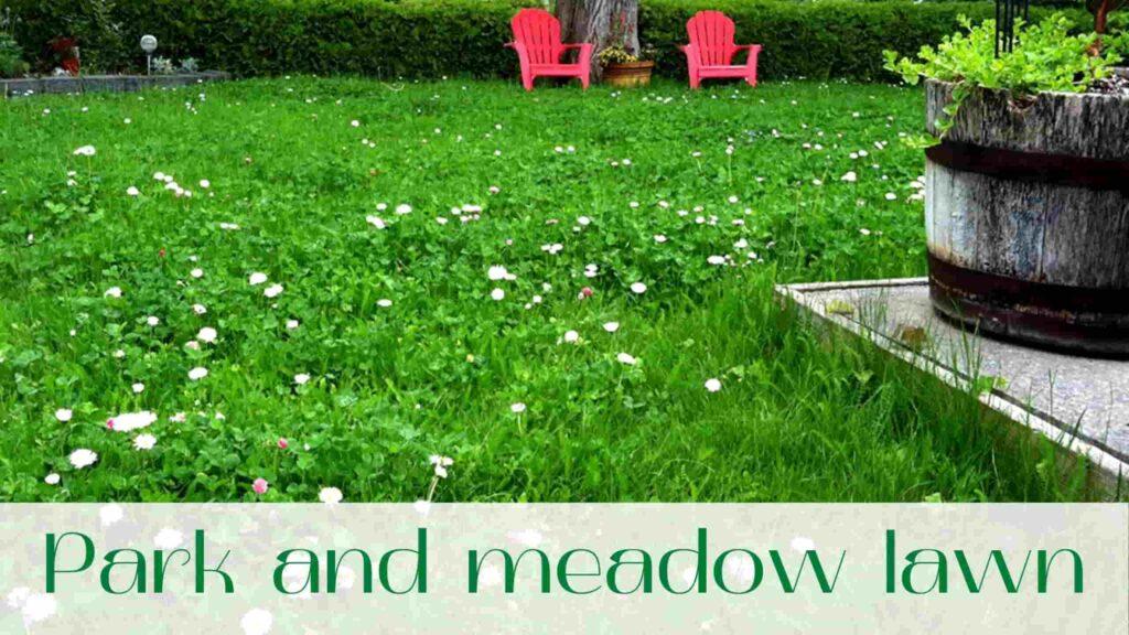 image-meadow-lawn-in-Vaughan