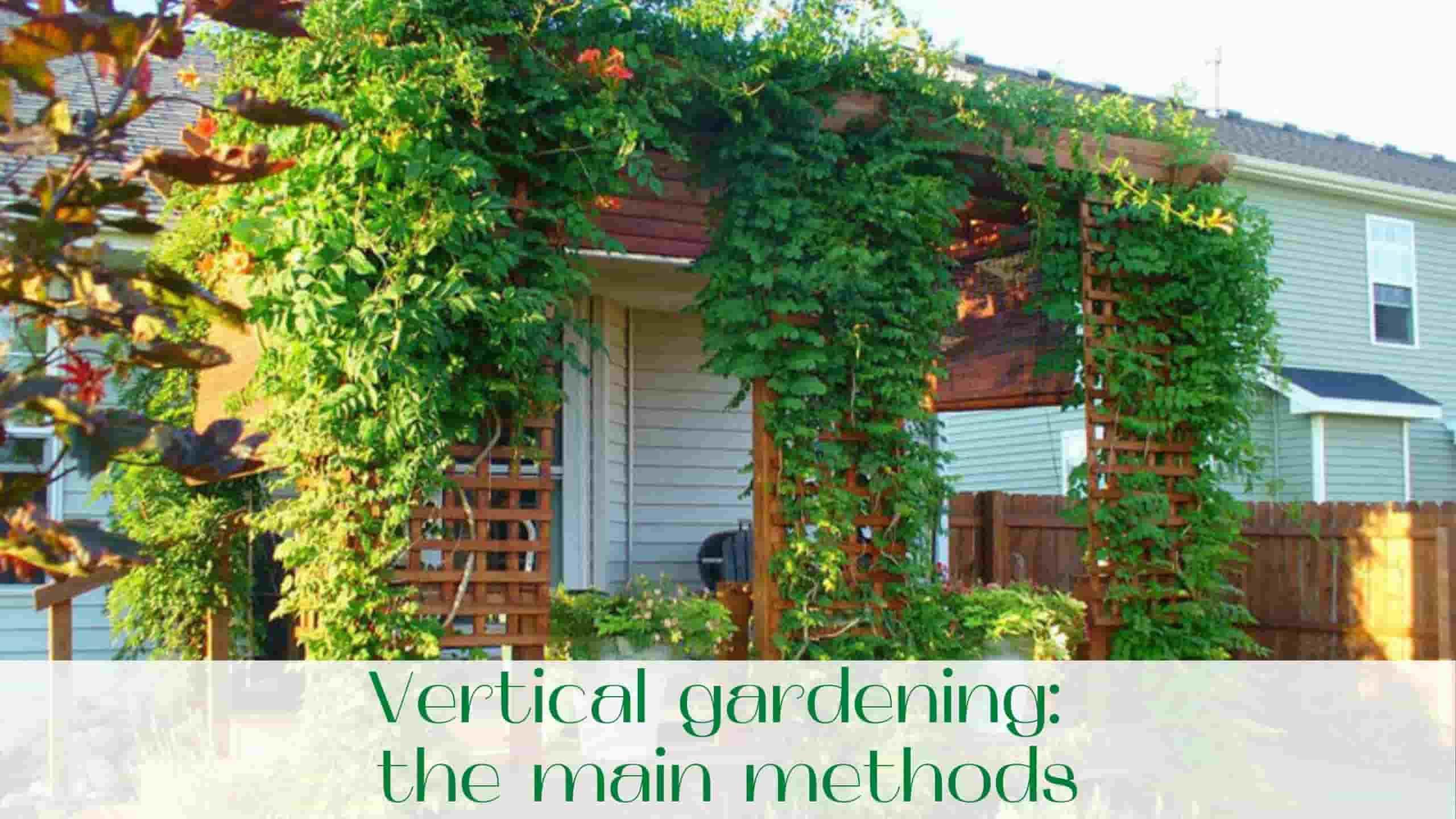 image-Vertical-gardening-the-main-methods