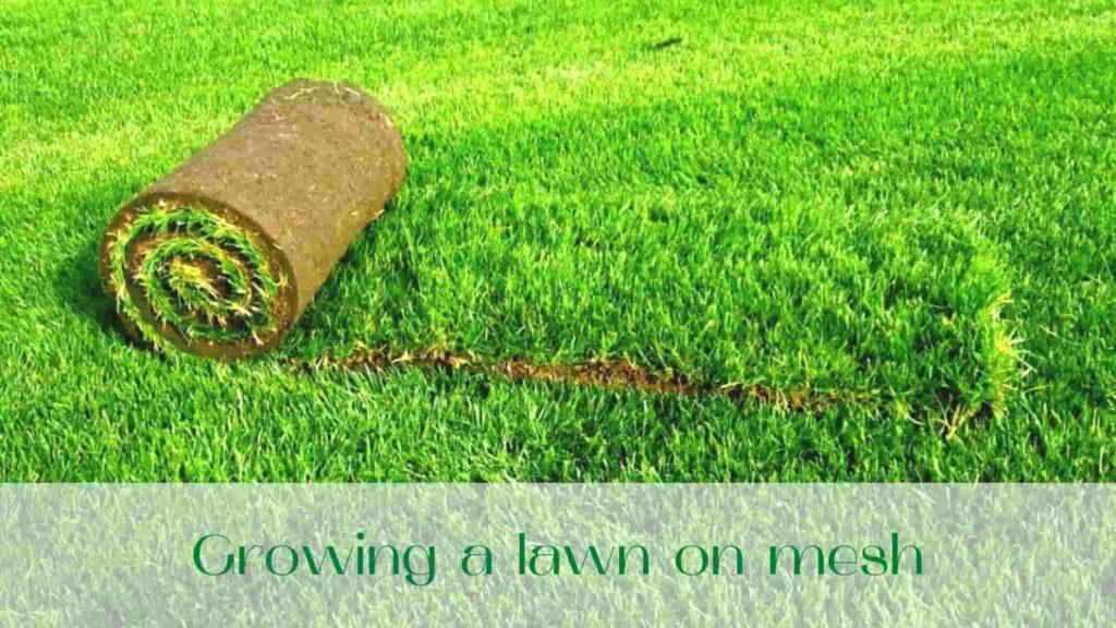 image-turf-in-Ontario