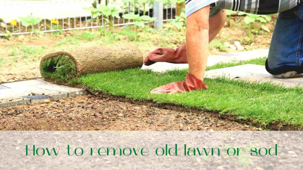 image-How-to-remove-sod