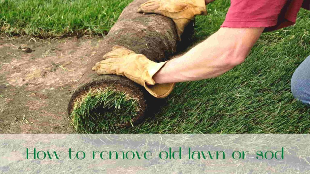 image-How-to-remove-sod-in-Ontario