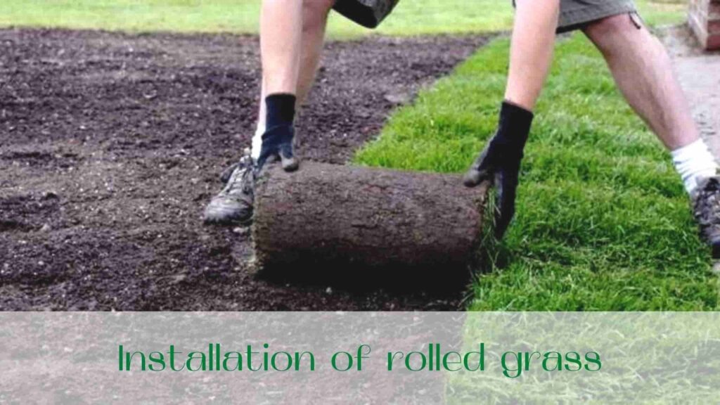 image-Installation-of-rolled-grass-in-Ontario