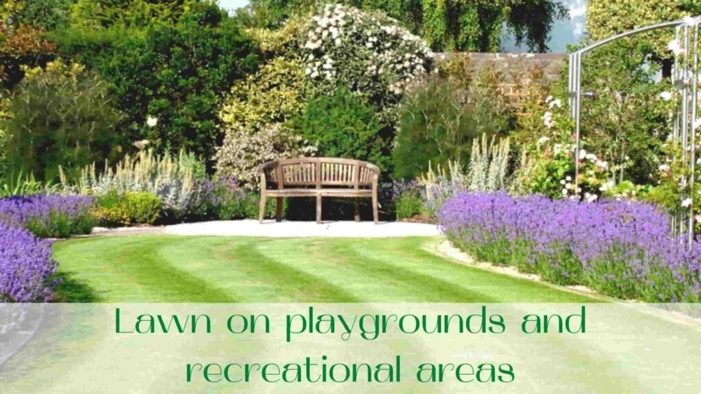 image-Lawn-on-playgrounds-and-recreational-areas