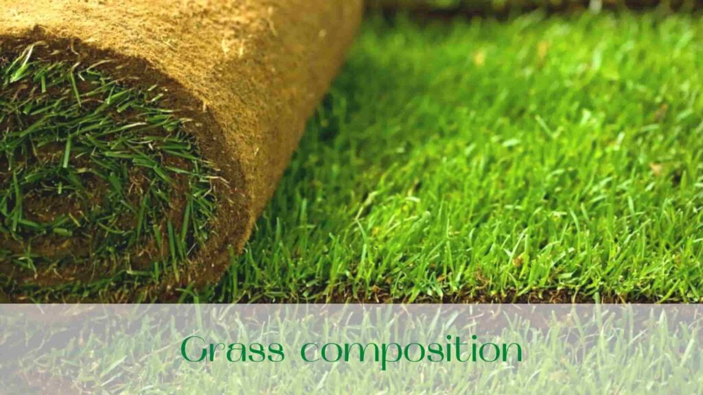 image-Rolled-lawn-or-seeded-lawn