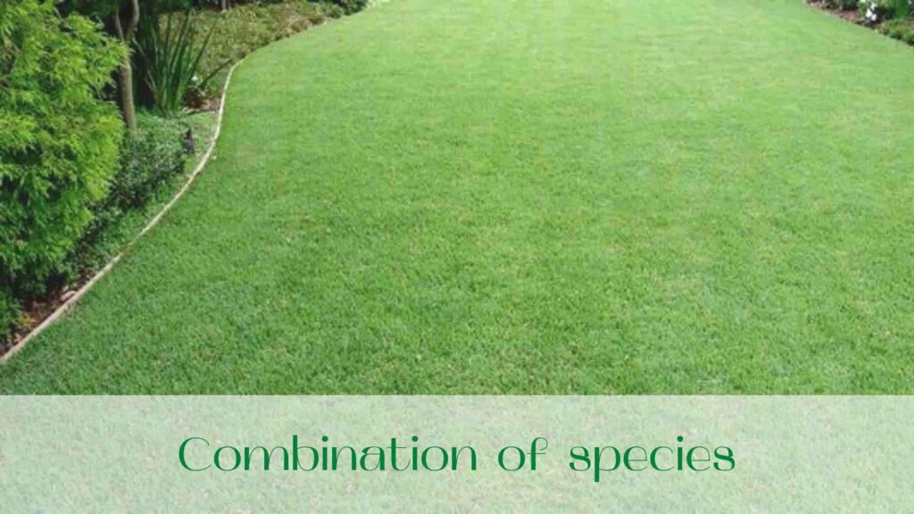 image-Rolled-lawn-or-seeded-lawn-Combination-of-species