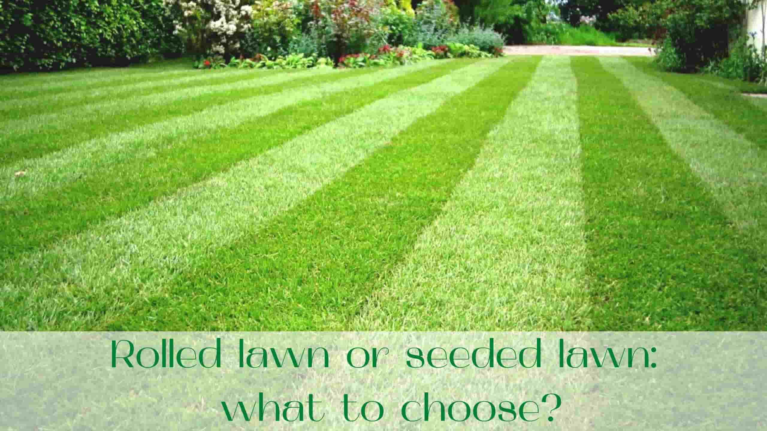 image-Rolled-lawn-or-seeded-lawn-what-to-choose