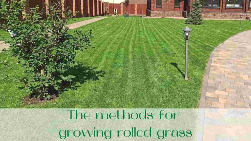 image-The-methods-for-growing-rolled-grass-Ontario
